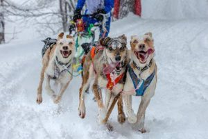 Tremblant activities, dog sledding in Mont Tremblant