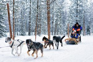 traineau a chien Tremblant. dog sledding Mont Tremblant