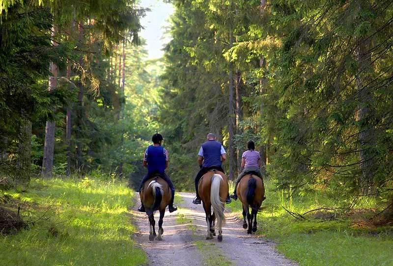 horseback riding in Mont Tremblant